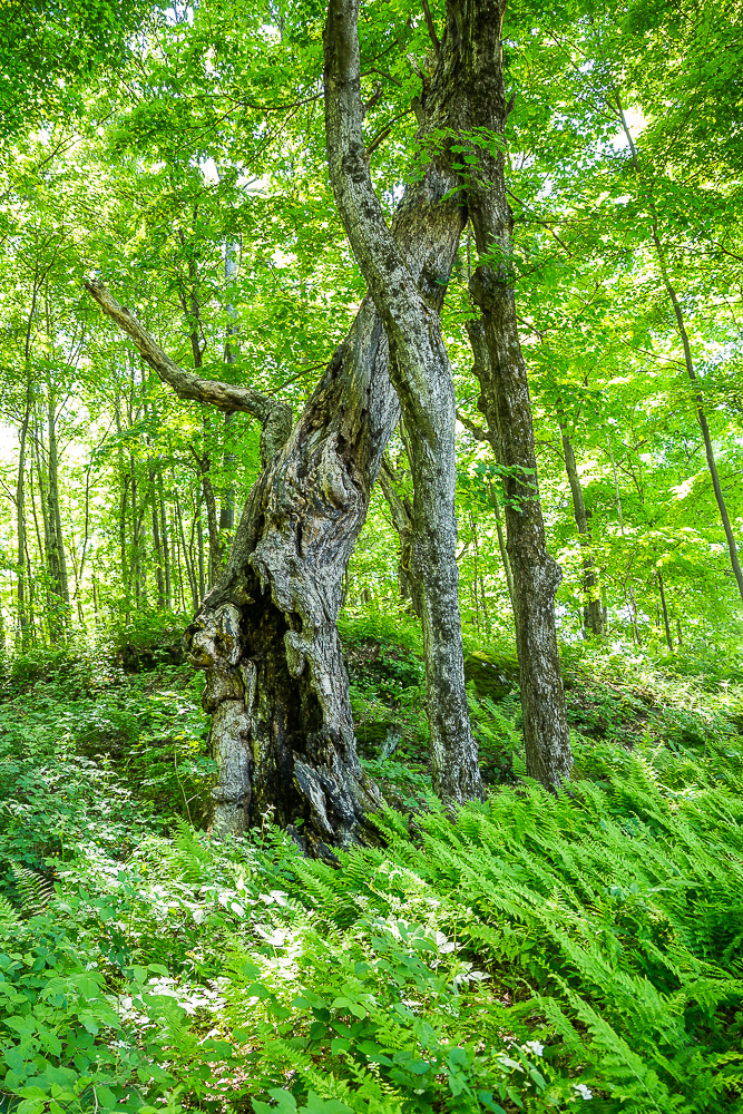 Nature, Abercorn, Danny Landry photographe